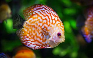 Обустройство домашнего аквариума и украшения