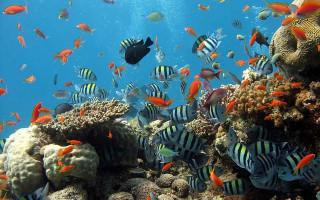 Краткое руководство по установке аквариума optiwhite