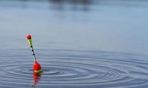 Как эффективно ловить рыбу донным кормом?