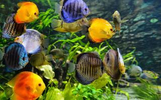 Как обустроить аквариум?