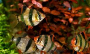 Адекватный рацион для вашей рыбы; какую еду выбрать?