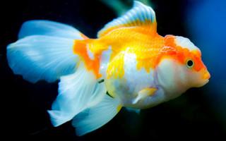 Кондиционер для аквариумной воды — как правильно подготовить воду для нашего аквариума?
