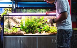 Какие аксессуары нужно иметь в аквариуме?