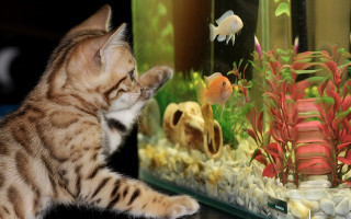 Аквариум — подводное царство в вашем доме