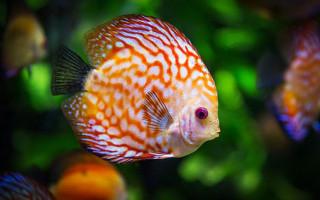 5 ошибок начинающего аквариумиста; избегай их, как огня!