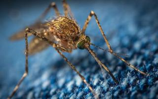 Мугга; эффективные и проверенные средства от клещей и комаров