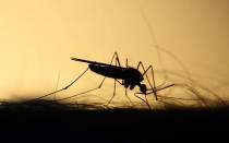 Будьте готовы к борьбе с насекомыми